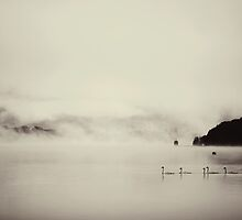 Swans in the mist by Tony Eccles