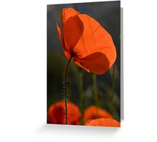 Poppies 2 Greeting Card