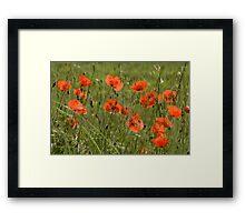Poppies 3 Framed Print