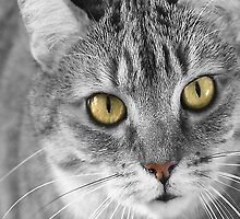Cat with Green Eyes Print by simpsonvisuals