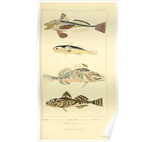 The Animal Kingdom by Georges Cuvier, PA Latreille, and Henry McMurtrie 1834  079 - Pisces Fish Poster