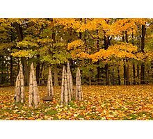 Autumn Photographic Print