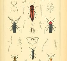 The Animal Kingdom by Georges Cuvier, PA Latreille, and Henry McMurtrie 1834  430 - Insecta Insects by wetdryvac