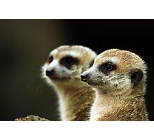 Close-up meerkats Photographic Print