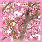 Pink Canopy of Love Scarf with Pink Border by Susan Werby