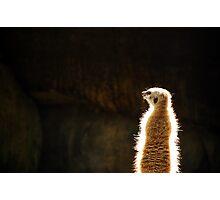 Jedi Meerkat Photographic Print