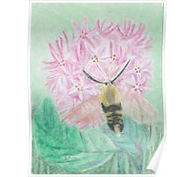Bumbel bee moth on milkweed bloom-oil pastels Poster