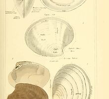 The Animal Kingdom by Georges Cuvier, PA Latreille, and Henry McMurtrie 1834  276 - Mollusca Mollusks by wetdryvac