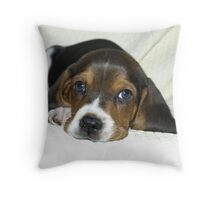 Dundee 8.5 weeks old Throw Pillow