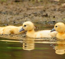 The three amigos by Lover1969