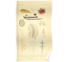 The Animal Kingdom by Georges Cuvier, PA Latreille, and Henry McMurtrie 1834  228 - Mollusca Mollusks Poster