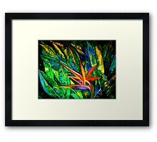 The Bird of Paradise Framed Print
