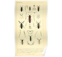 The Animal Kingdom by Georges Cuvier, PA Latreille, and Henry McMurtrie 1834  433 - Insecta Insects Poster