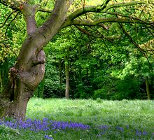 """Tree Hugging"" by Bradley Shawn  Rabon"