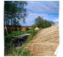 Reeds by the river bank Poster