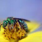 Bee by Tamara Brandy