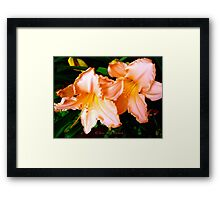 The Garden Collection...Daydreamer.... Framed Print
