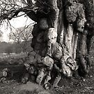 Scary Tree  by iOpeners