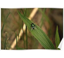 Green Fly Poster
