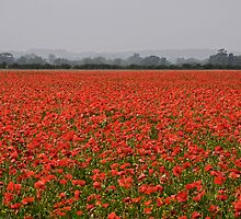 Poppy Field by Paul Woloschuk