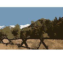 "'Good fences, make......."" Photographic Print"