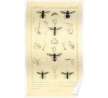The Animal Kingdom by Georges Cuvier, PA Latreille, and Henry McMurtrie 1834  529 - Insecta Insects Poster