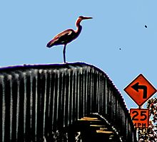 THE GREAT BLUE HERRON ON THE BRIDGE by SMOKEYDOGSOCKS