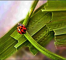 red and black lady bug on a mission  by mandyemblow