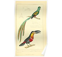The Animal Kingdom by Georges Cuvier, PA Latreille, and Henry McMurtrie 1834 705 - Aves Avians Birds Poster