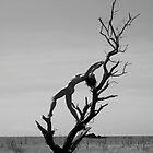 Sylvia - Tree Goddess by jasontagphoto