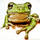 Green Tree Frog by Donna Rondeau