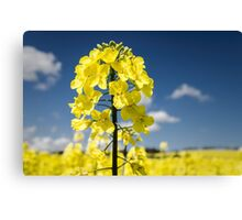 Yellow . Yellow Canvas Print