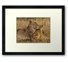Lion Baby with Mother Framed Print