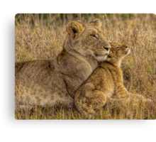 Lion Baby with Mother Canvas Print