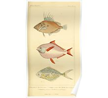 The Animal Kingdom by Georges Cuvier, PA Latreille, and Henry McMurtrie 1834  151 - Pisces Fish Poster