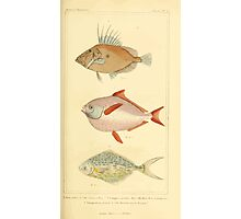 The Animal Kingdom by Georges Cuvier, PA Latreille, and Henry McMurtrie 1834  151 - Pisces Fish Photographic Print