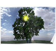 Lens Flare thru Tree Poster