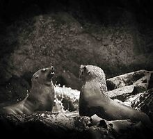 Seals by DanielTMiller