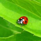 Lady Bug, Lady Bug by Vickie Emms