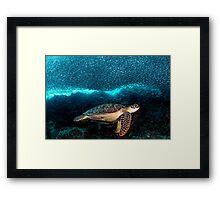 Turtle and Sardines Framed Print
