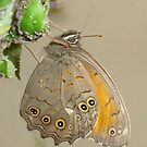 Butterflies and Aphids by taiche