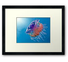 Crown Jellyfish Framed Print