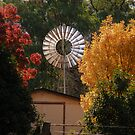 Autumn Mill by pedroski