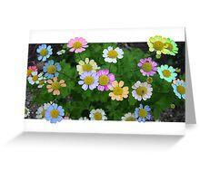 Coloured Daisies Greeting Card