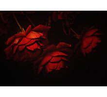 The rose speaks of love silently . . . Photographic Print