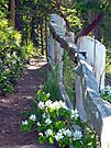Down The Wooded Path by Tamara Valjean