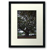 The Faraway Tree Framed Print
