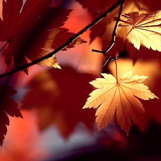 Autumn Shadows by James McKenzie