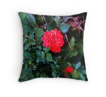 Rosebush IV Throw Pillow