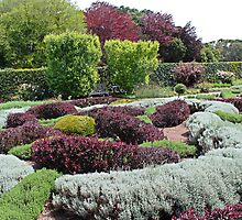 The Herbal Knot Garden at Filoli by Martha Sherman